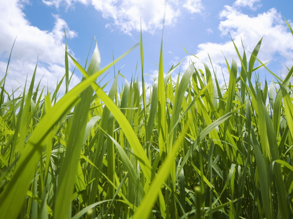 grass-and-sky-wallpapers_8286_1024x768